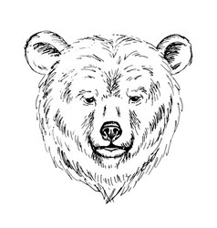 sketch by pen of a bear head vector image