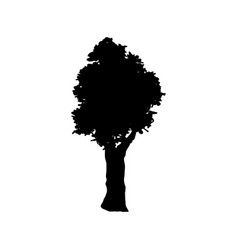 Tree silhouette branch trunk foliage image vector