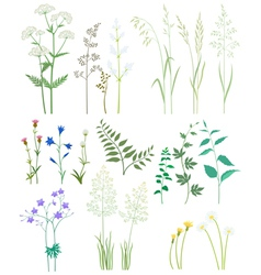 Grass and wild flowers vector image vector image