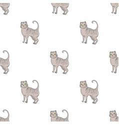 British shorthair icon in cartoon style isolated vector