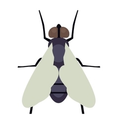 Fly insecct isolated vector image vector image