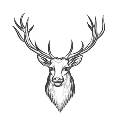 Hand drawn deer head vector image