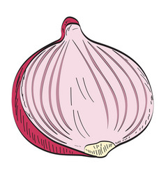 isolated cut onion vector image vector image