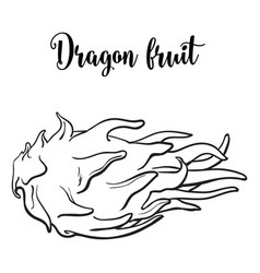 whole unpeeled uncut dragon fruit in horizontal vector image
