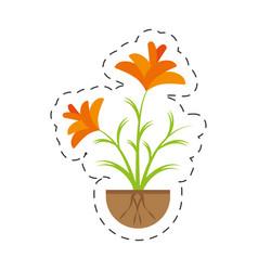 freesia flower growing garden vector image