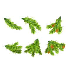 set of christmas tree branches for decorations vector image