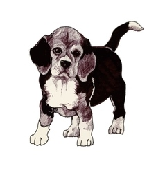 Sketched hound puppy dog hand drawn vector