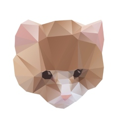 Cat from a geometrical vector