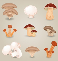 Collection of isolated edible mushrooms for your vector image