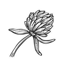 Flower isolated freehand pencil drawing vector