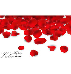 red rose petals on a white background vector image