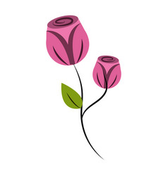 Beauty roses with petals plant vector