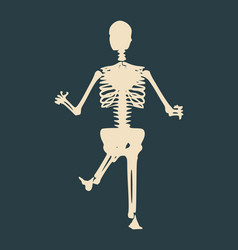 halloween human skeleton vector image