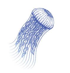 Hand drawn jellyfish vector