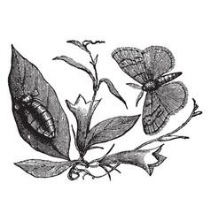 vapourer moth vintage vector image vector image