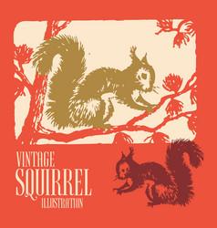Vintage animal design squirrel vector