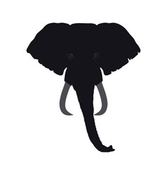 elephant head front view this silhouette may be vector image