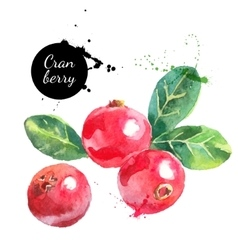 Hand drawn watercolor cranberry painting on white vector