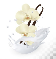 Vanilla sticks with flowers in a milk splash on a vector