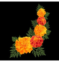 Marigolds on black vector