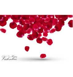 Valentines day with rose petals on white backgroun vector