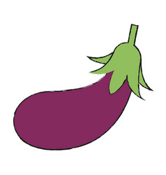 Eggplant vector