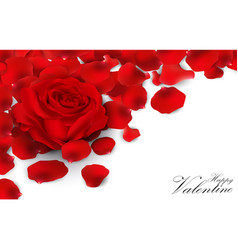 Red roses and rose petals on white background vector