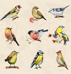 Vintage a collection of birds watercolor painting vector