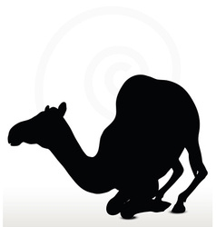 Camel in kneeling pose vector