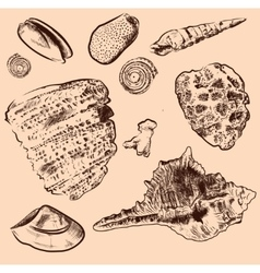 Sea shell collection Original hand drawn vector image