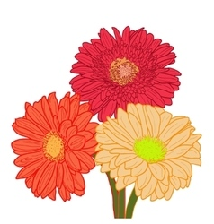 Bouquet of three colorful gerberas hand drawn vector