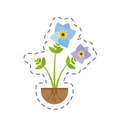 Pansy flower spring growing vector