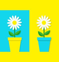 White daisy chamomile icon flower pot set cute vector