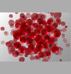 Background with rose petals vector