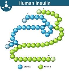 Human insulin hormone molecule vector