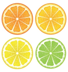 Various Citrus Slices2 vector image vector image