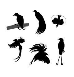 Birds of paradise silhouettes vector