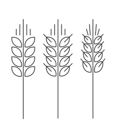 Wheat spike icons set isolated outline vector