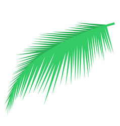 Palm leaf object vector