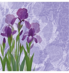 Flowers iris for holiday design vector