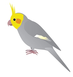 Cockatiel vector