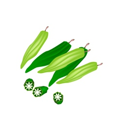 Fresh okra or lady finger on white background vector