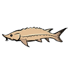 Sturgeon freshwater fish vector