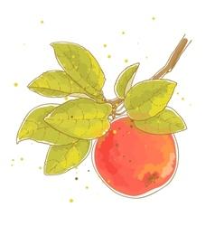 Apple branch vector image