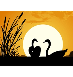 Swans at dawn vector