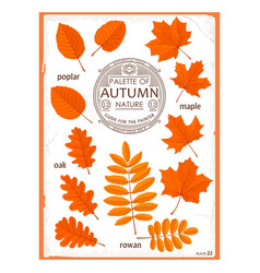 set of colored autumn leaves vector image