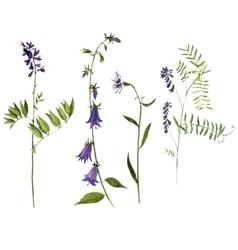 set of watercolor drawing plants vector image
