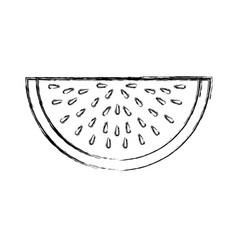 Watermelon tropical fruit icon vector