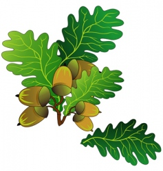 Oak acorns vector
