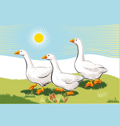Geese in a meadow vector